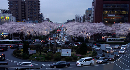 国立お花見.jpg