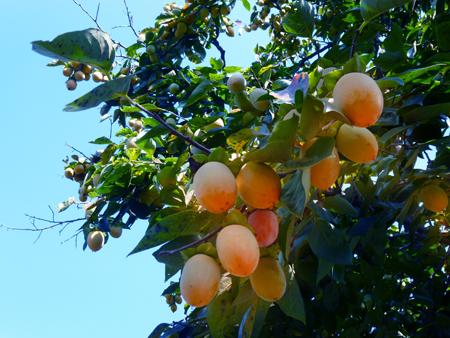 秋の風景-4.JPG