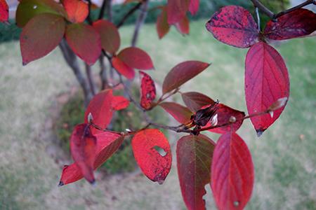 エルグデザイン秋の庭-6.jpg