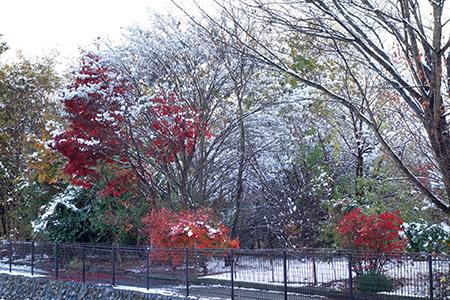 雪景色2.JPG