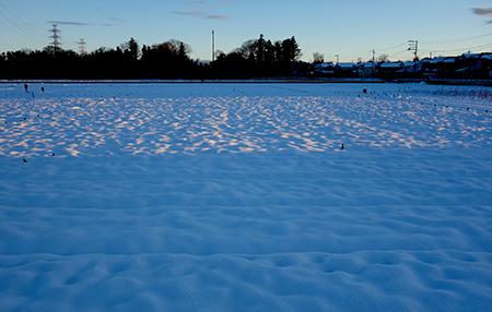 エルグデザインの冬の散歩-3.jpg