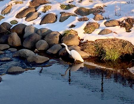雪景色とサギ-2.jpg