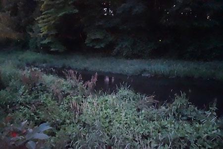 蛍の河.JPG