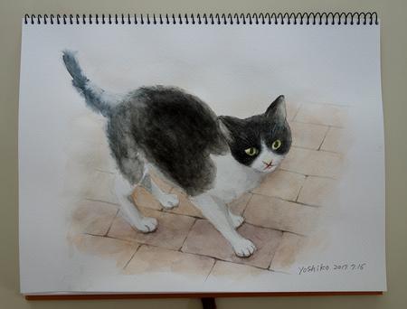 美子水彩猫2.JPG