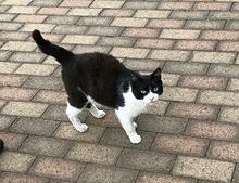猫の写真.jpg