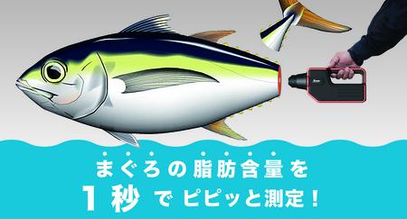 PiPi TORO-1.jpg