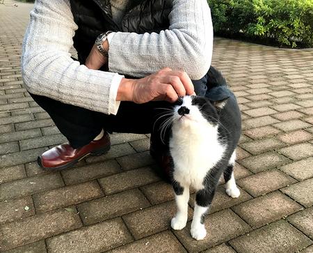 猫-2.jpg