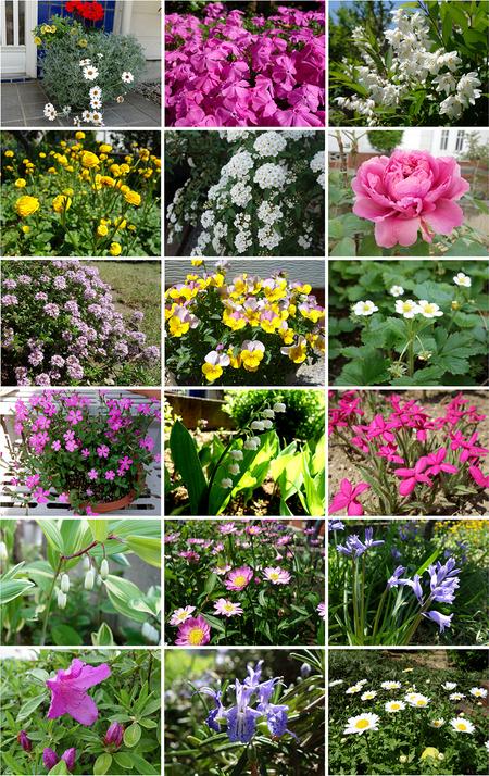 エルグデザイン庭の花々1.jpg