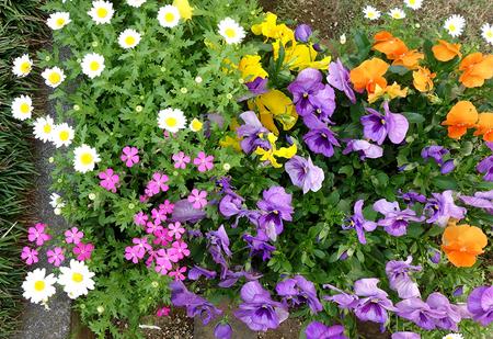 エルグデザイン庭の花.JPG
