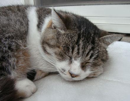 エルグデザインの哲学猫