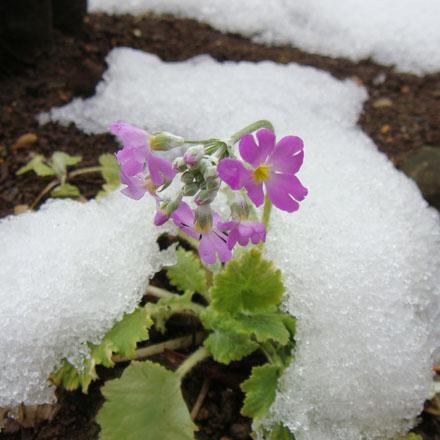 エルグデザイン庭の花
