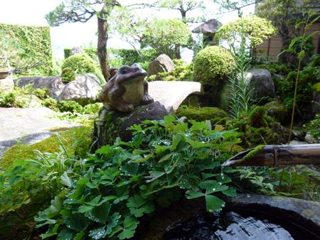 庭のカエル.JPG