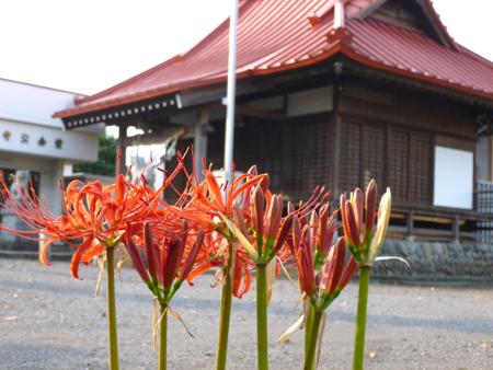 秋の風景-3.JPG