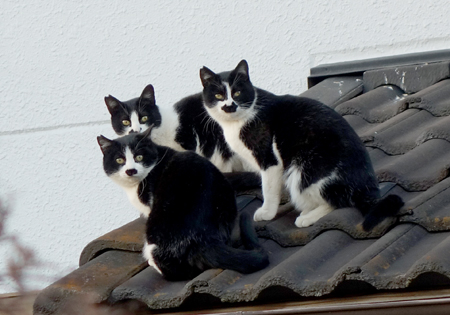 猫3匹.jpg