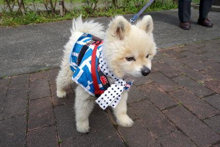 祭り犬.JPG