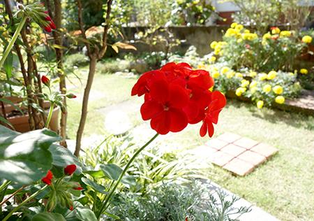 エルグデザイン秋の庭-1.jpg