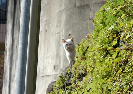 御嶽の猫1.jpg