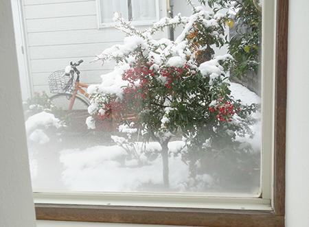 11月の雪1.JPG