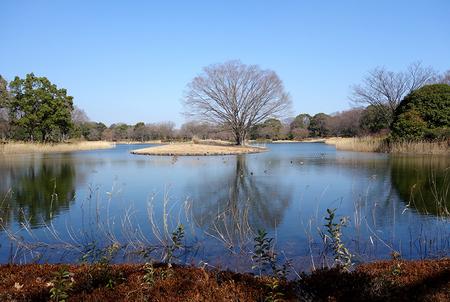 昭和記念公園-1.JPG