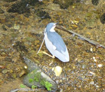 エルグデザインが見つけた鳥